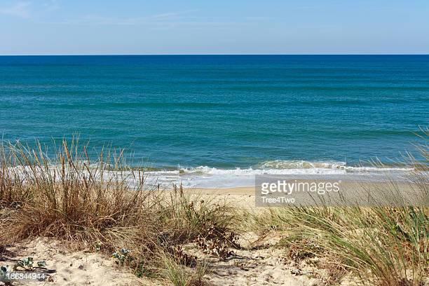 Côte d'Argent-Dunes avec des herbes