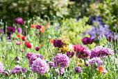 English cottage garden with wild flowers