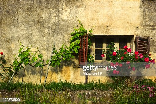 Cottage in Provence : Stock Photo
