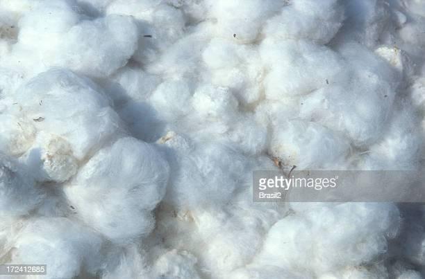 Culturas de algodão