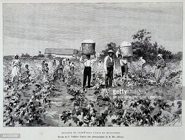 Cotton harvest in the State of Mississippi drawing by G Vuillier from a photograph by M Mac Allister United States of America 20th century