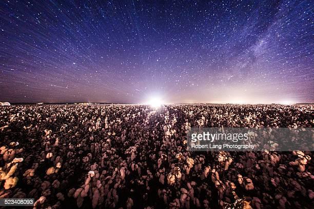 Cotton harvesting at night, Australia