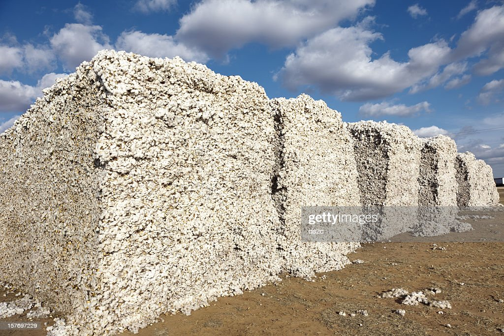 cotton modules in gin yard ready for ginning : Stock Photo