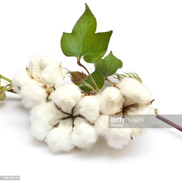En coton