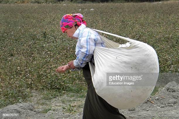 Cotton Worker Uzbekistan