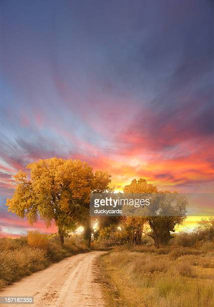 Cottonwood Trees and Dirt Road with Beautiful Sunrise