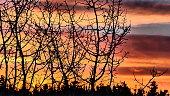 Ciel orange et jaune vif avec des arbres sans feuillage et la silhouette de sapins en arrière plan