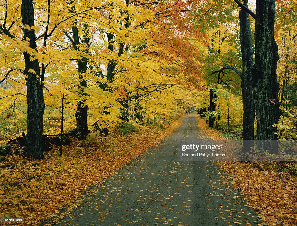 Country Dirt Road With Autumn Foliage In Vermont