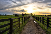 Country lane between pastures on a Kentucky horse farm at sunset with lens flare