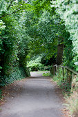 Country Lane in British Countryside