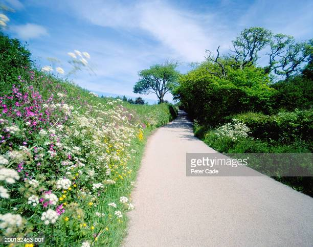 Country lane lined with grass and wildflowers