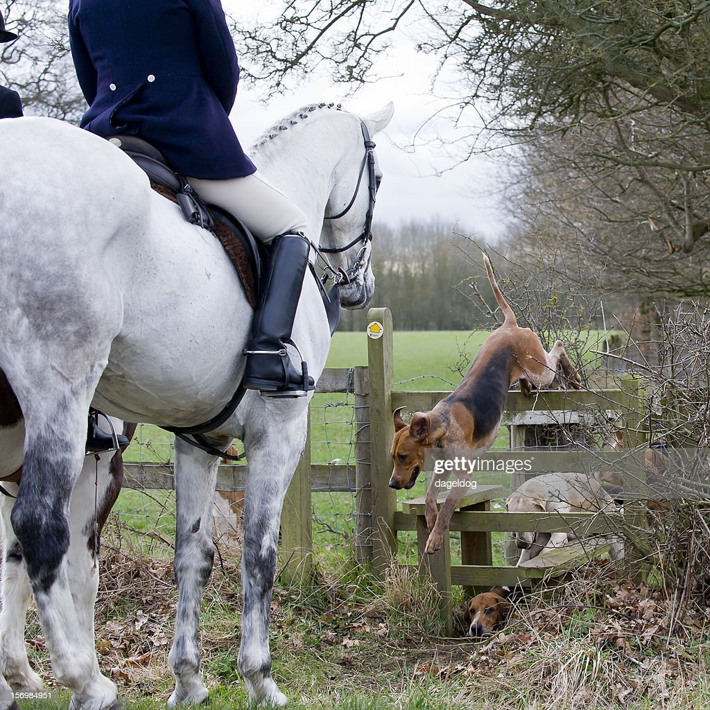 Country Pursuits : Stockfoto