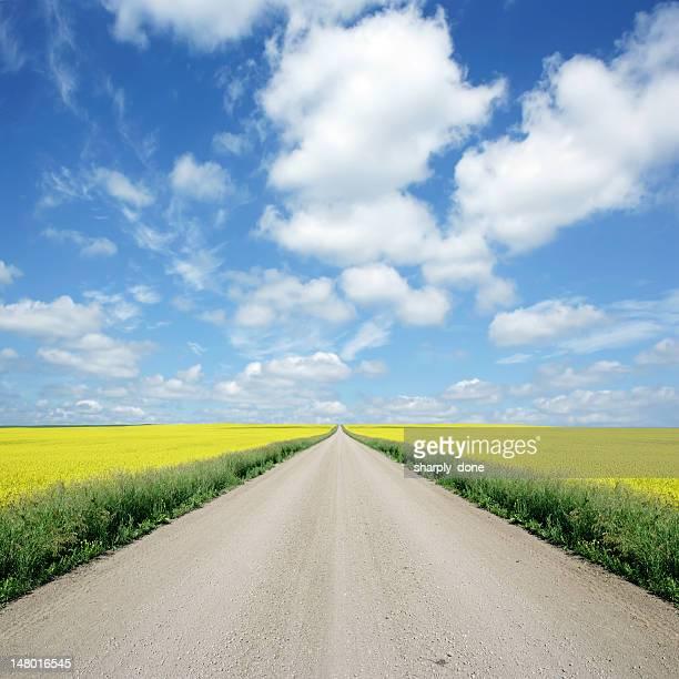 XXXL country road およびキャノーラ