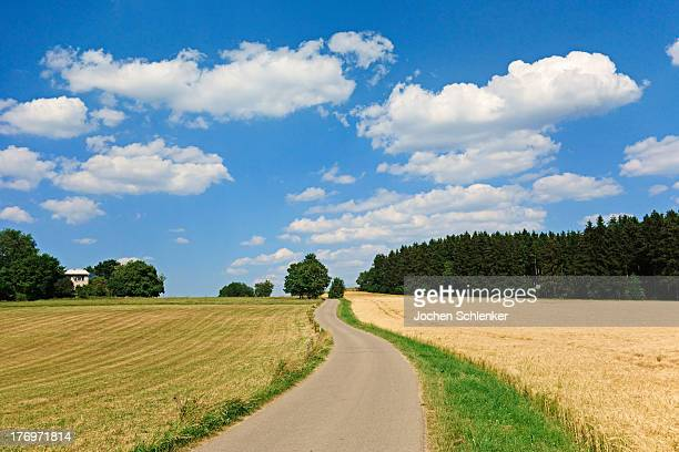 Country road and fields