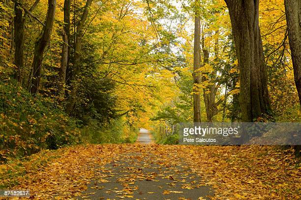 Country road covered in autumn leaves