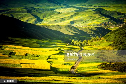 country road go through the Canola field : Stock Photo