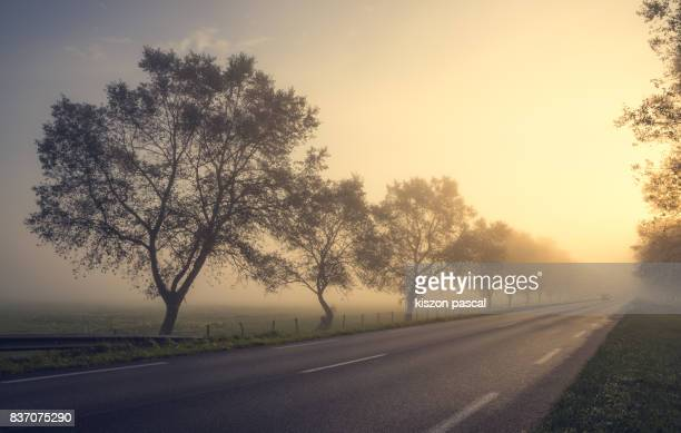 country road in a fog in morning