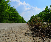 A country road in a sunny day, taken at low angle.