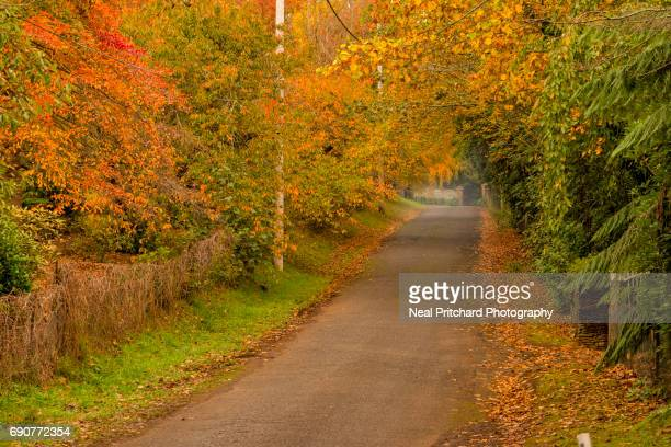 Country road in fall season