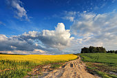Country road in spring colza fields in Belarus