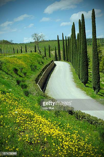 country road in spring time
