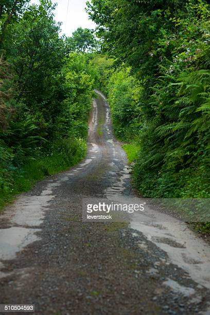 A country road in Tipperary