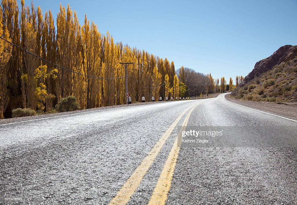 country road lined with cottonwood : Stock Photo