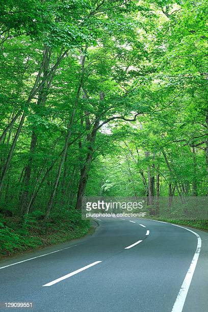 Country Road Through Forest