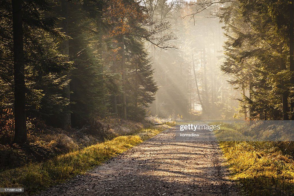 Country Road through the Foggy Autumn Forest : Stock Photo