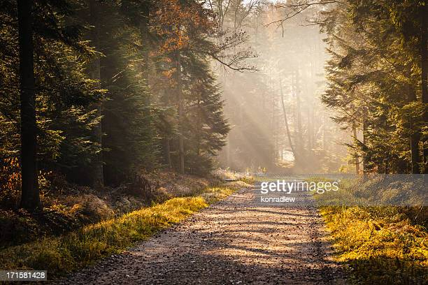 Country Road through the Foggy Autumn Forest