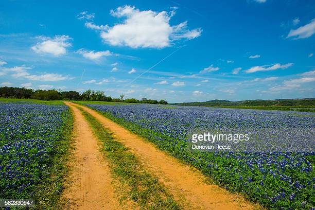 Country road thru bluebonnets,Texas