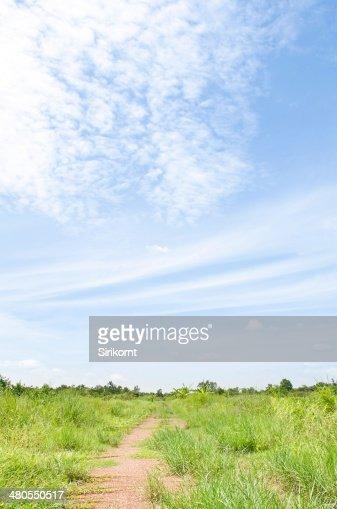 País caminho de floresta com céu azul. : Foto de stock