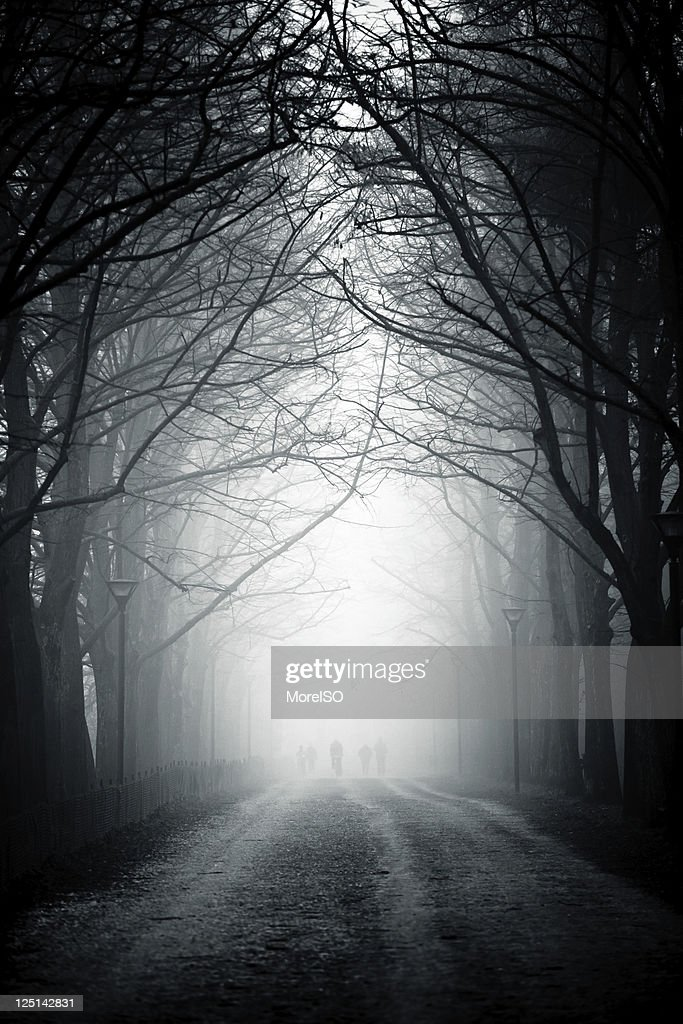 Country Road Tree Canopy in the Fog, Nobody : Stock Photo