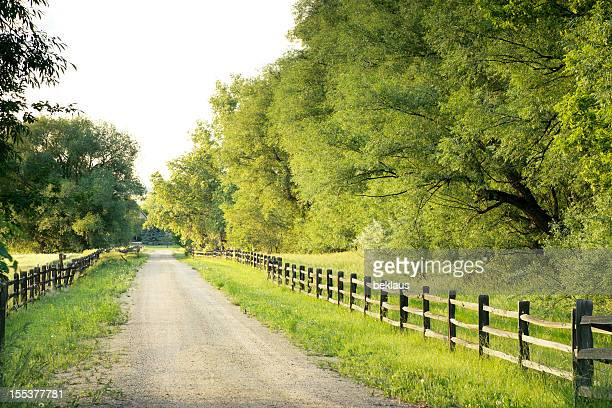 Country road with big green trees and fences at either side