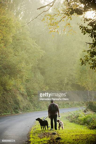 Country road, young man walking with two dogs on leashes.