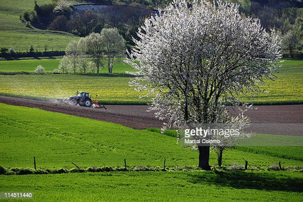 countryside in Normandy during spring