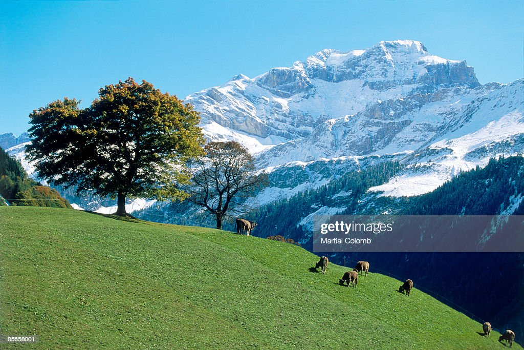 countryside in OBERLAND : Stock Photo