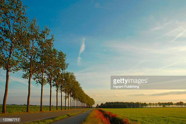 Countryside view of road lined with trees