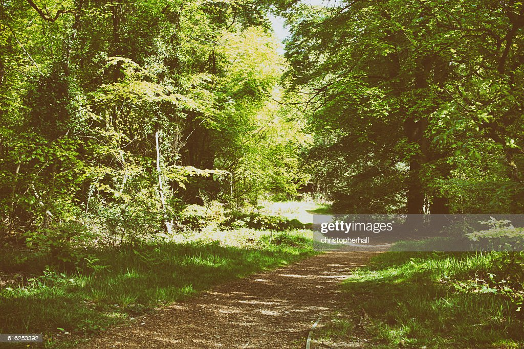 Countryside walk with path winding through trees : Stock Photo