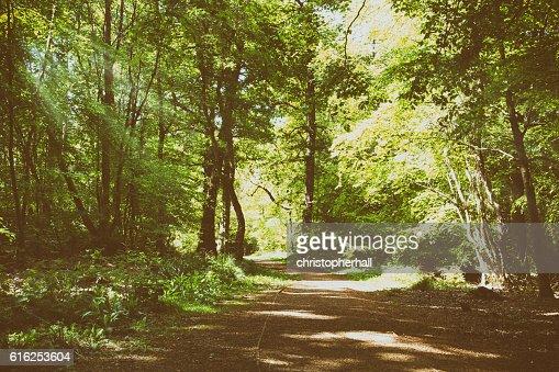 Natureza passeio com caminho através de árvores de liquidação : Foto de stock