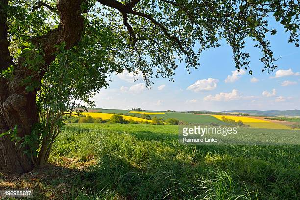 Countryside with Apple Tree