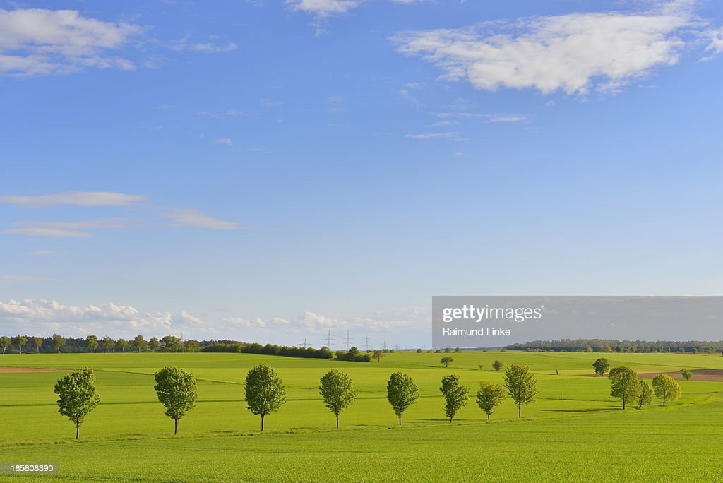 Countryside with Lime Tree Row : Stock Photo