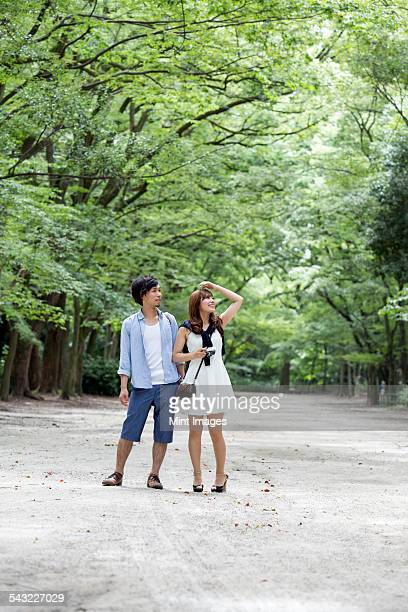 A couple, a man and woman in a Kyoto park in an avenue of mature trees.