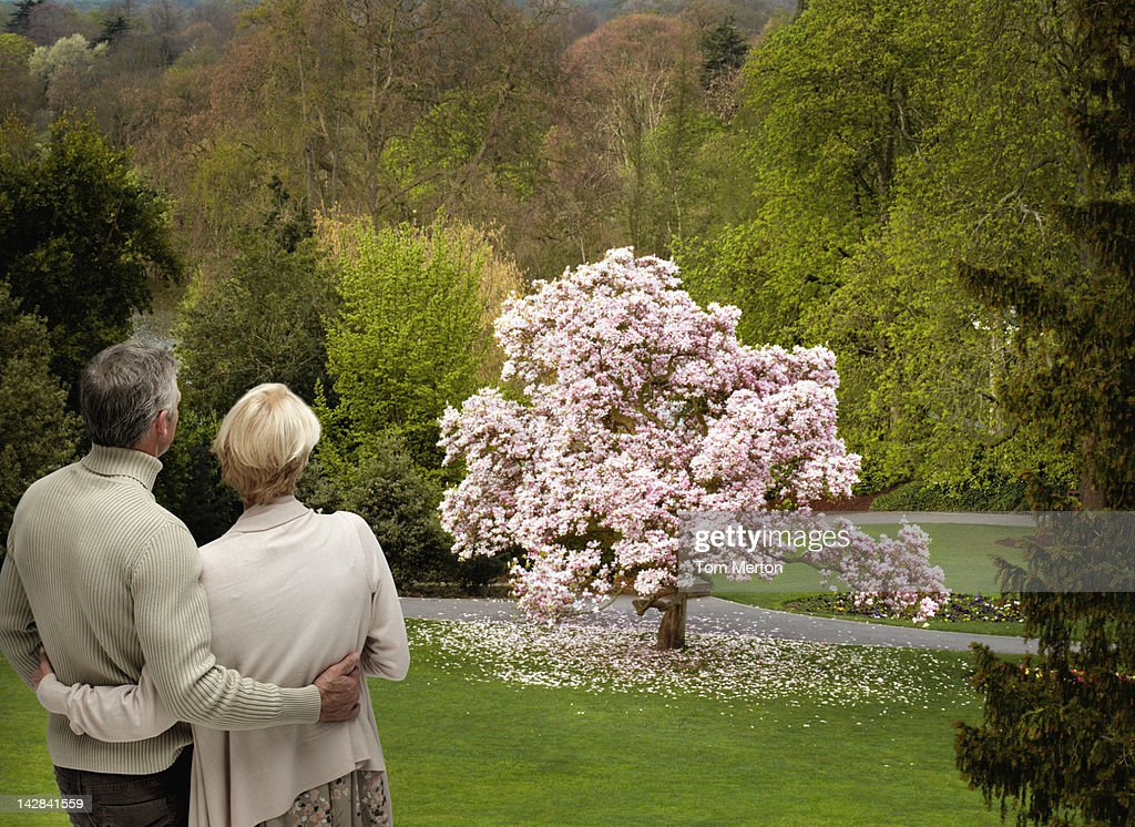 Couple admiring flowering tree : Stock Photo