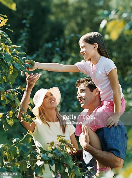 Pareja y la hija selección de frutas