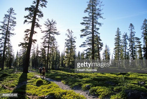 Couple backpacking along wooded trail. : Stock Photo