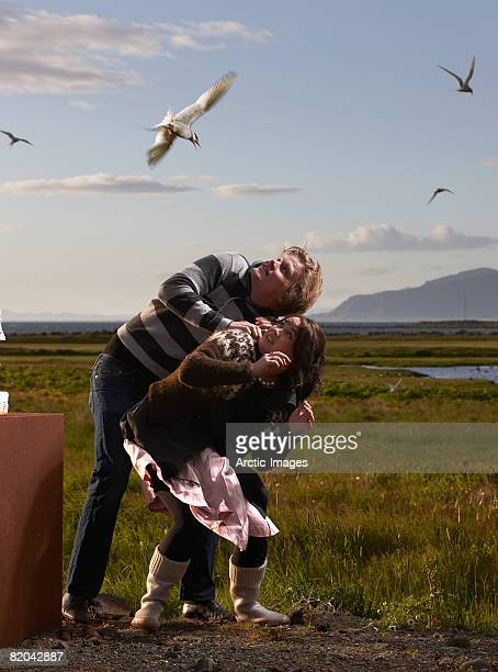 Couple being attacked by Terns
