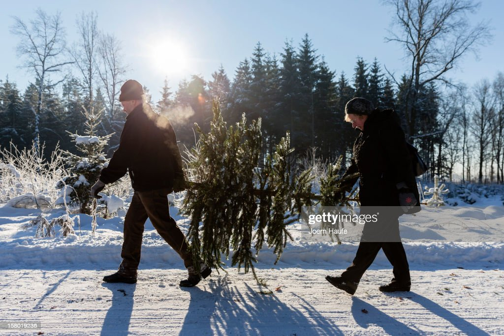 A couple carry a Christmas tree they chose and cut down themselves in a forest on December 8, 2012 in Fischbach, Germany. Forestry officials in the state of Saxony officially opened the 2012 Christmas tree season for people who want to retrieve their tree from designated forests rather than just buying it readily cut.