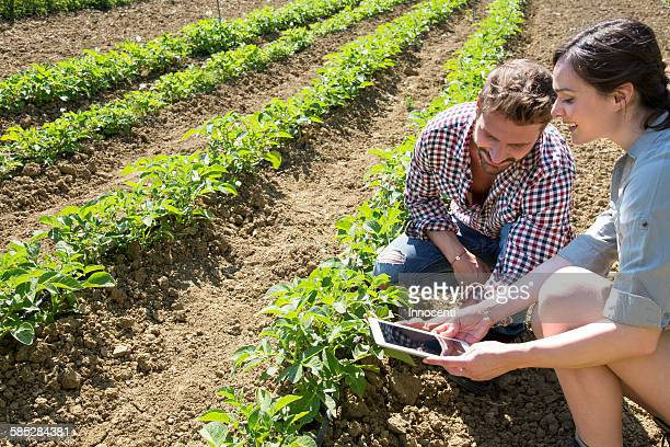 Couple crouching in field using digital tablet to photograph tomato plant