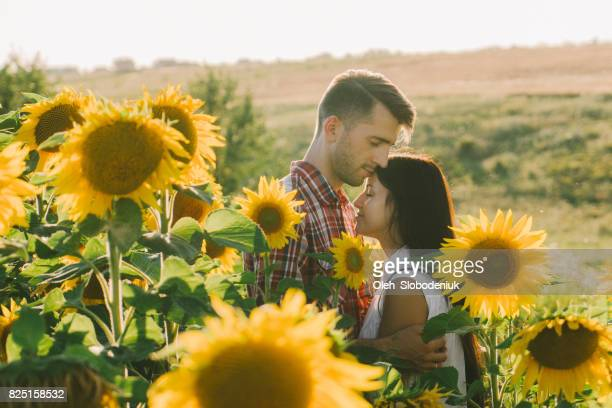 Couple embracing in sunflower field at sunset